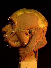 Image of Forbes Quarry Neanderthal